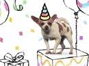 Dog Translator Interactive Birthday eCards