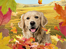 Thanksgiving Surprise Interactive Thanksgiving eCards