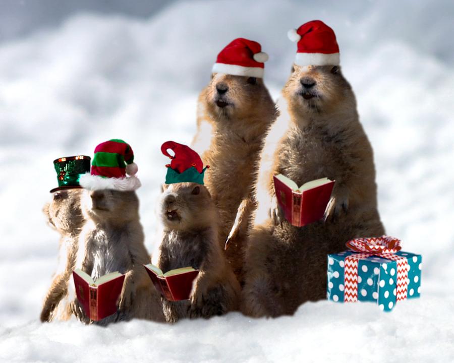 Prairie Dog Christmas (Personalize Lyrics)