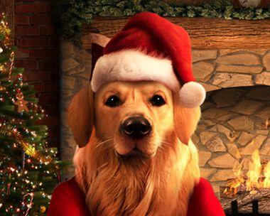 Talking Santa Dog (Personalize)