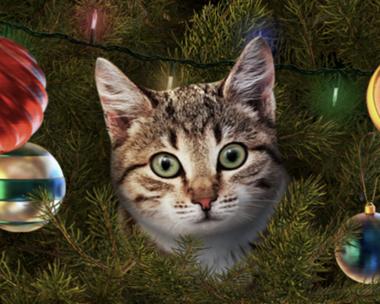 Talking Cat Christmas Ecard (Personalize)