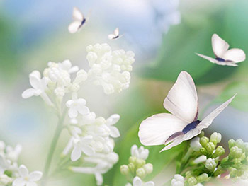 butterflies and flowers wallpapers free wallpapers