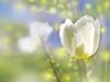 May Calendar  -- Free Flower, Nature Desktop Wallpapers from American Greetings
