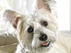 Puppy Pals  -- Free Dogs, Pets Desktop Wallpapers from American Greetings