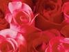 February Calendar  -- Free Flower, Nature Desktop Wallpapers from American Greetings