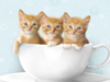 a cupful of kittens