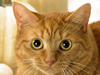 A Cat in Autumn  -- Free Cats, Pets Desktop Wallpapers from American Greetings