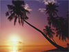 February Calendar  -- Free Nature, Desktop Wallpapers from American Greetings