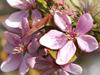 April Calendar  -- Free Flower, Nature Desktop Wallpapers from American Greetings