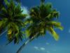 May Calendar  -- Free Beach, Nature Desktop Wallpapers from American Greetings