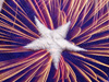 The Colors of Freedom  -- Free 4th of July, Holiday Desktop Wallpapers from American Greetings
