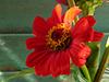 August Calendar  -- Free Flower, Nature Desktop Wallpapers from American Greetings