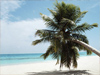 Shady Palm  -- Free Beach, Nature Desktop Wallpapers from American Greetings