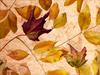 October Calendar  -- Free Nature, Desktop Wallpapers from American Greetings