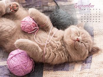 Cat Nap Wallpapers