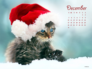 Meowy Christmas Wallpapers
