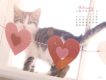 Purrty in Pink Wallpapers