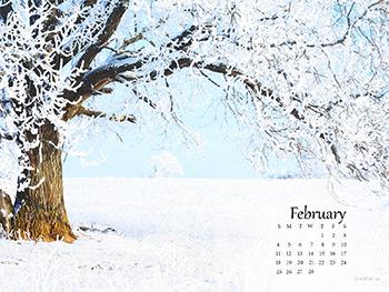 Winter Wonders Wallpapers