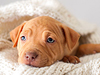 Laid-Back January  -- Free Dogs, Pets Desktop Wallpapers from American Greetings