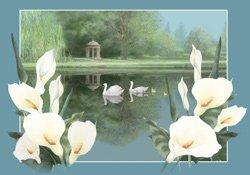 Swan Lake (New Baby version)