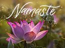Namaste Have a Nice Day eCards