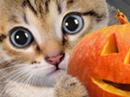 Better Beware Halloween eCards