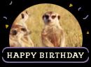 Meerkat Birthday Birthday eCards