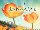 Sending You Sunshine Summer Postcards