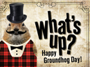 Groundhog Day Postcard Groundhog Day eCards