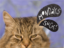Mondays Suck! Postcard Just Because Postcards