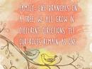 Family Tree Quote Postcards