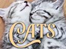 International Cat Day 8/8 eCards