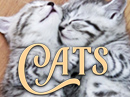 International Cat Day 8/8/18 eCards