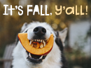 It's Fall, Y'all! Autumn eCards