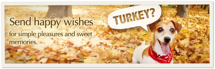 Give thanks for the special people in your life with Thanksgiving ecards.