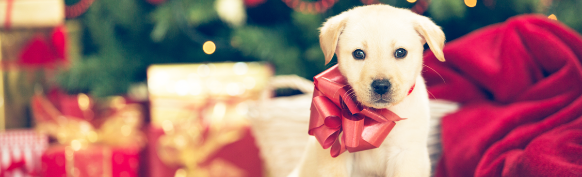 Cute puppy with bow in front of a Christmas tree with gifts.