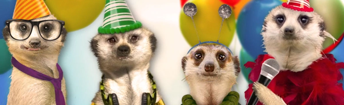 Four meerkats wearing birthday party hats