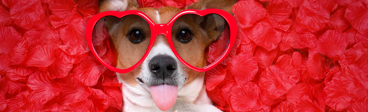 Puppy with glasses on rose petals