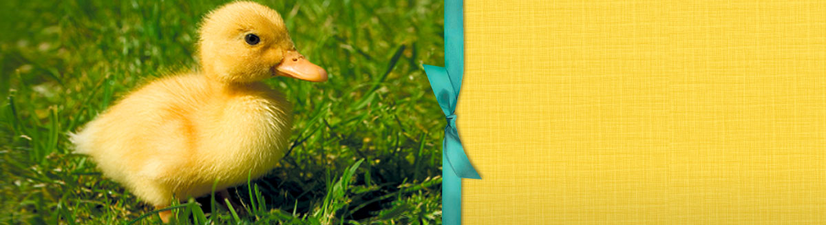 Cute baby duckling in grass - Media Banner