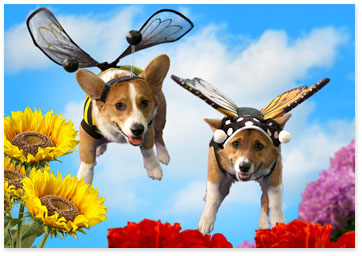 2 Corgi dogs wearing butterfly wings - Browse Mother's Day ecards