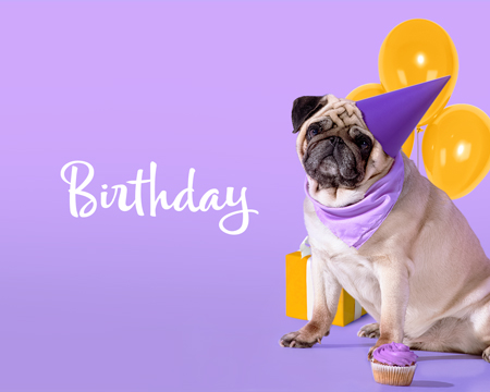 Pug dog celebrating a birthday.