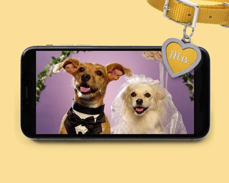 Cute Wedding Ecards
