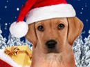 Santa Puppy Talking Card Christmas eCards