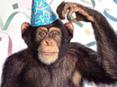 Party Monkey Talking Card Birthday eCards