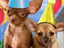 Pooch Party Talking Card Birthday eCards