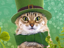 St. Cat's Day Talking Card St. Patrick's Day eCards