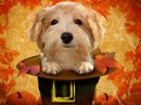 Pilgrim Pup Talking Card Thanksgiving eCards