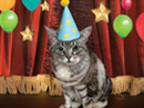 Purrfect Birthday Talking Card Birthday eCards