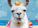 Bahama Llama Talking Card Just Because eCards