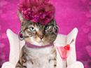Be My Valentini Talking Card Valentine's Day eCards